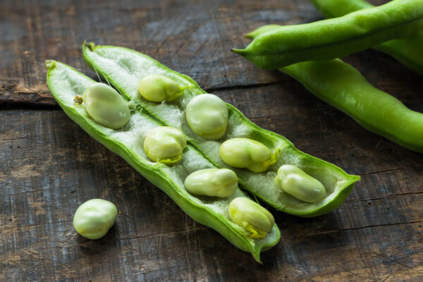 An Aquadulce broad bean cut open on a table showing the lovely beans