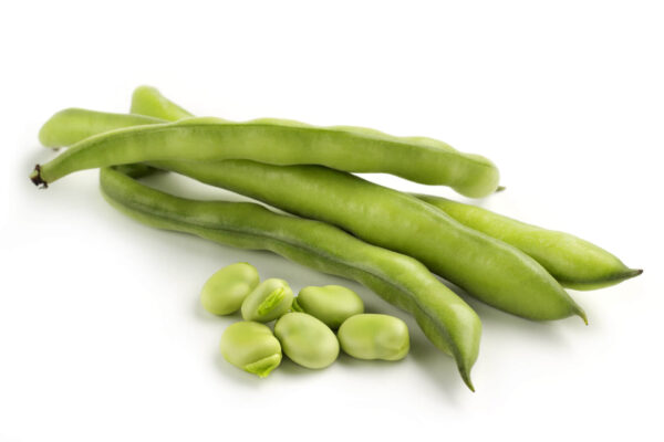 Tripoli broad beans on a white background