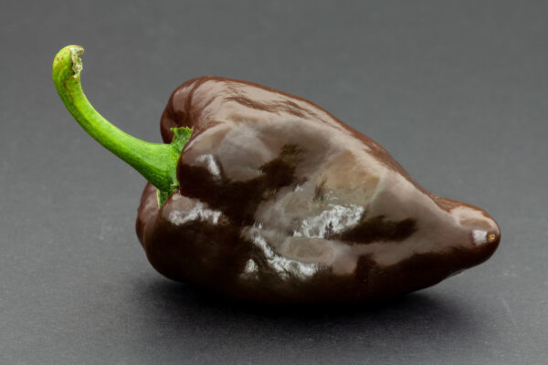 a Chocolate Beauty Capsicum on a simple grey background