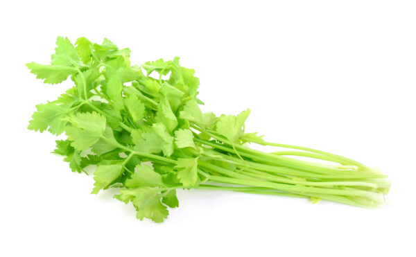 A healthy bunch of Light Green Chinese Celery on a white background