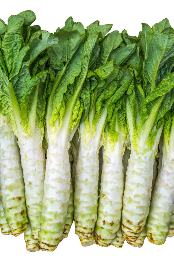 A group of harvested Celtuce stems in a row with green leaves on a white background