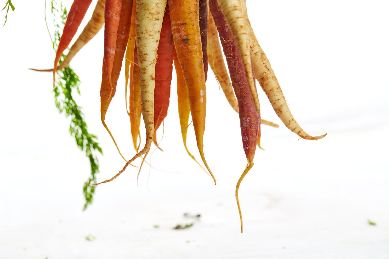 Assortment of carrot varieties hanging