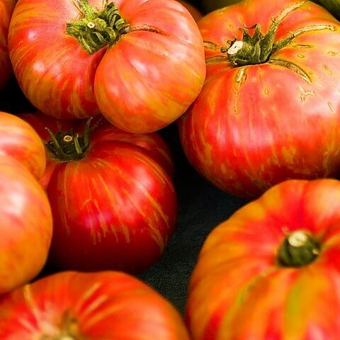 Big Rainbow Tomatoes all sitting together showing the red and yellow stripes
