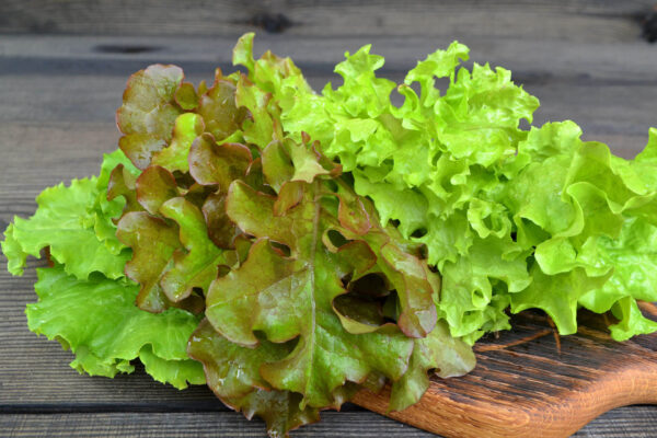 Oakleaf Green Lettuce picked and piled on a rustic wooden table