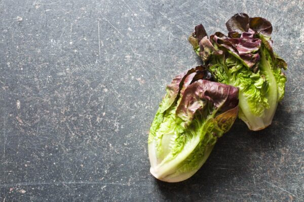 Two frwsh Romaine Red Cos Lettuces resting on a concrete bench top.