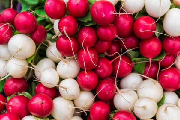 Confetti Radish Mix of Red and White radishes.