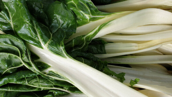 Closeup of Chard Fordhook Giant silverbeets white stalks and green leaves