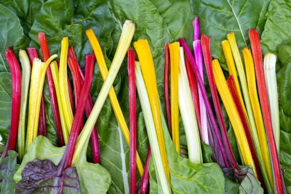 Rainbow Chard stems of yellow white pink and red