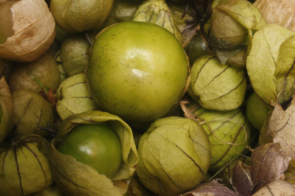 Tomatillos up close with the husk still attached
