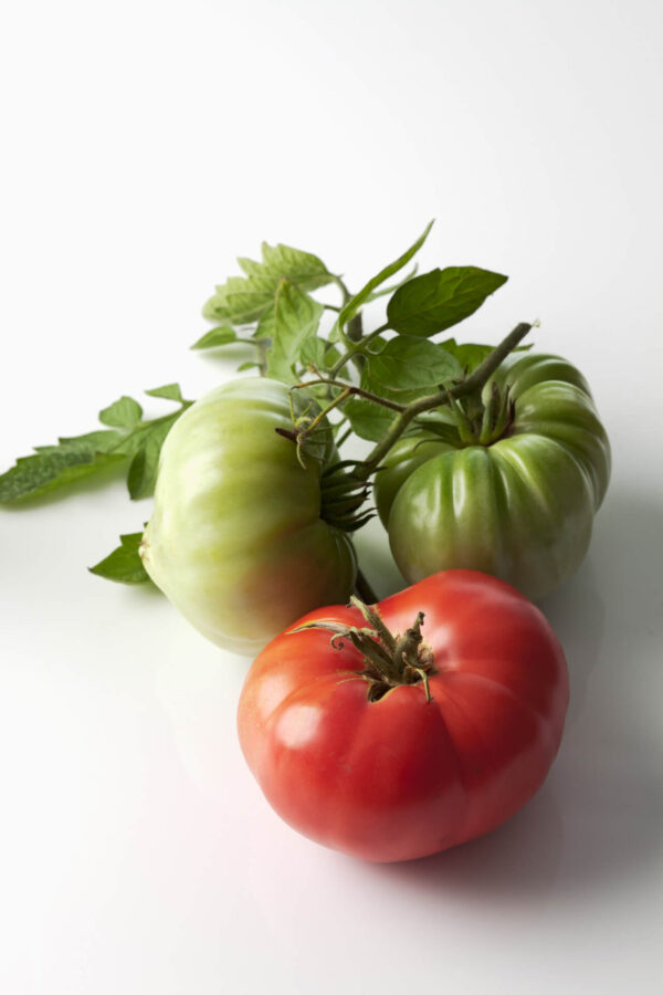 Three Brandy Wine Red tomatoes on a white background showing every stage of growth and colour.