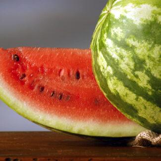 Watermelon Bush Jubilee Seeds