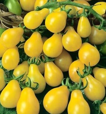Yellow Pear tomatoes in a bowl