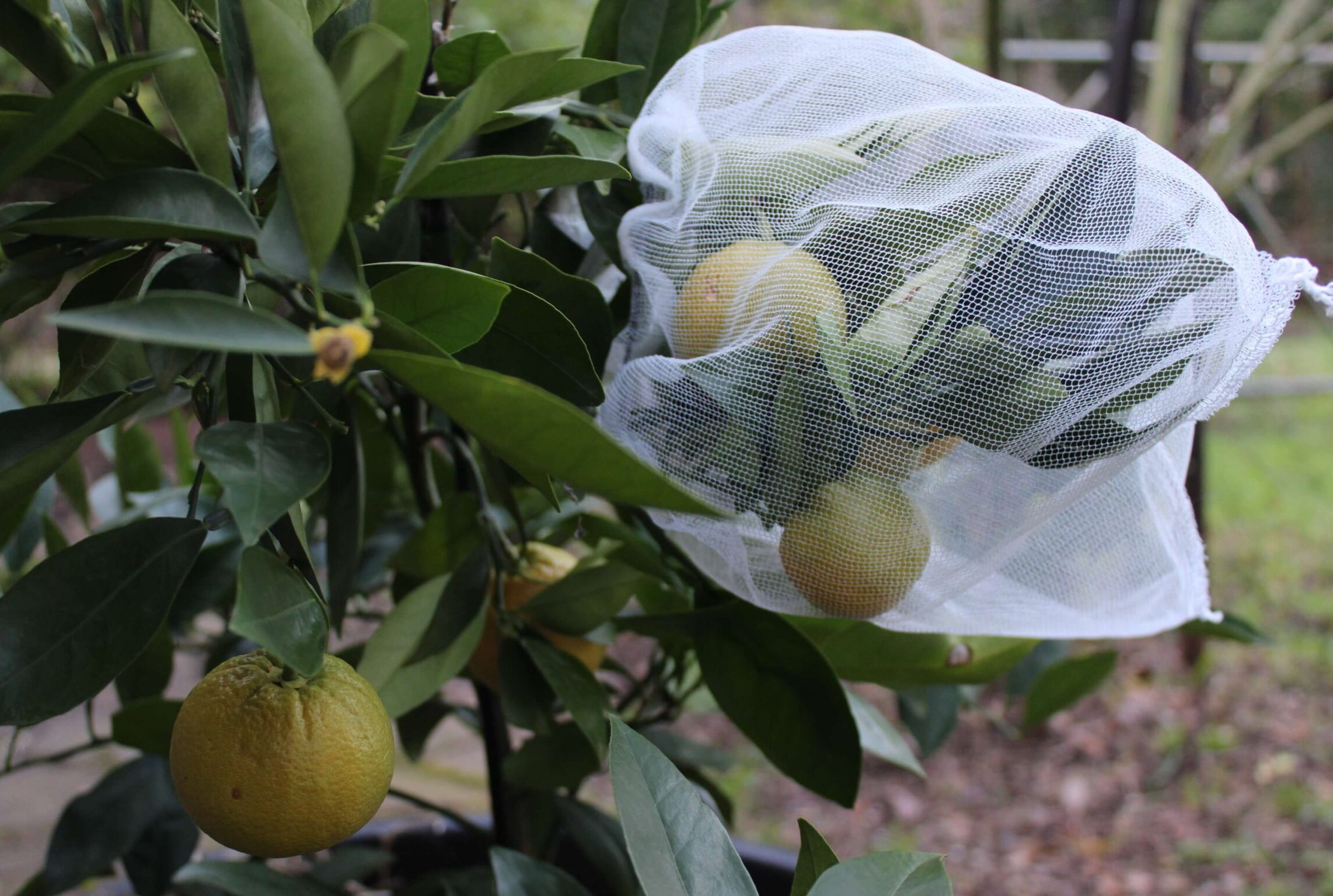 Vegetable Fruit protection bags