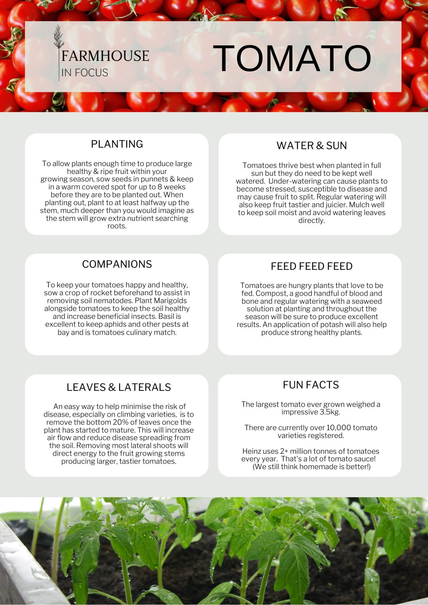 Tips on growing tomatoes in your vegetable garden. Information sheet