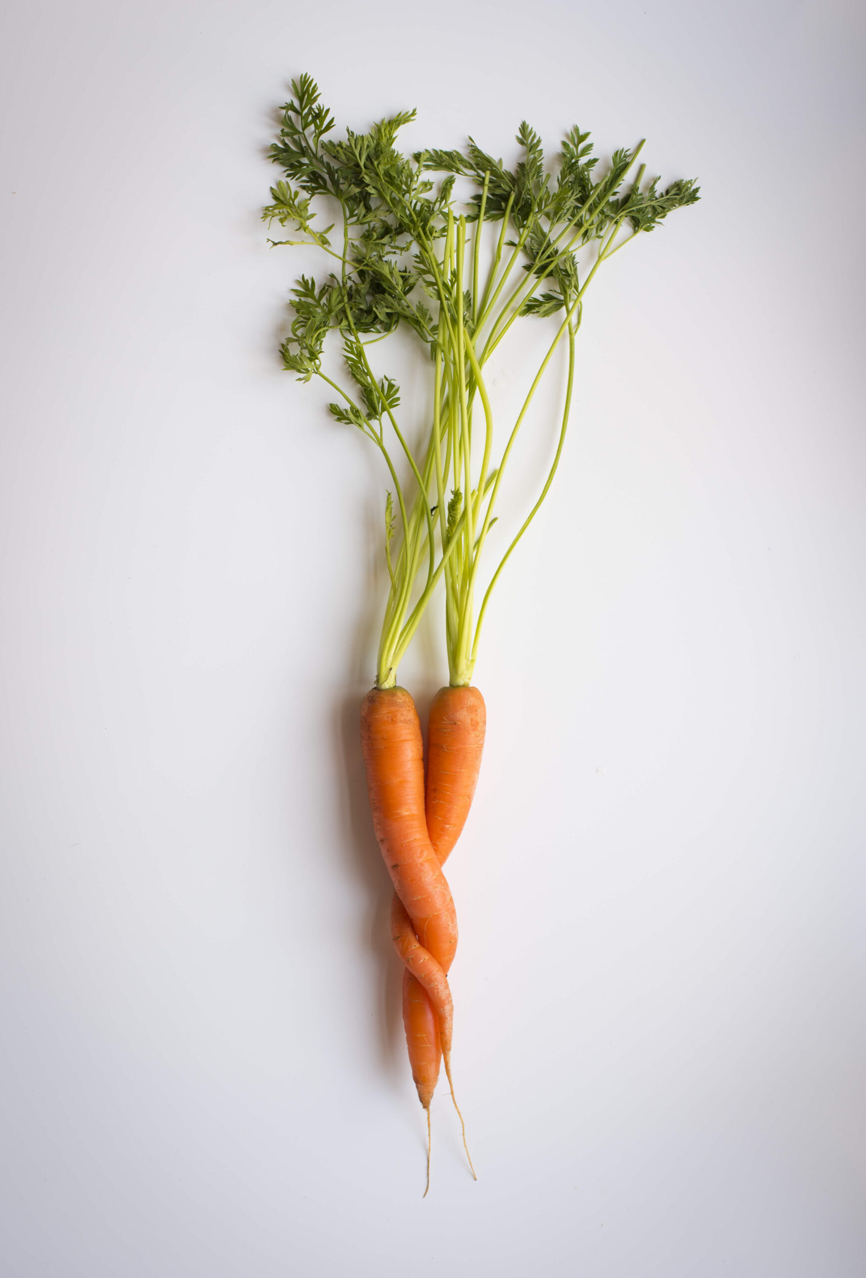 two carrots twisted together like community
