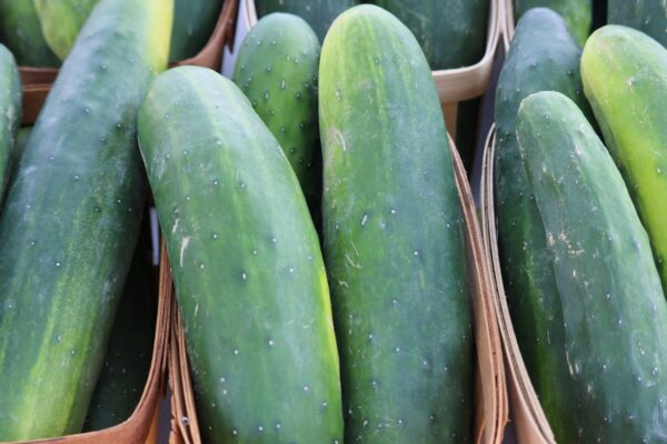 Cucumber Marketmore on display