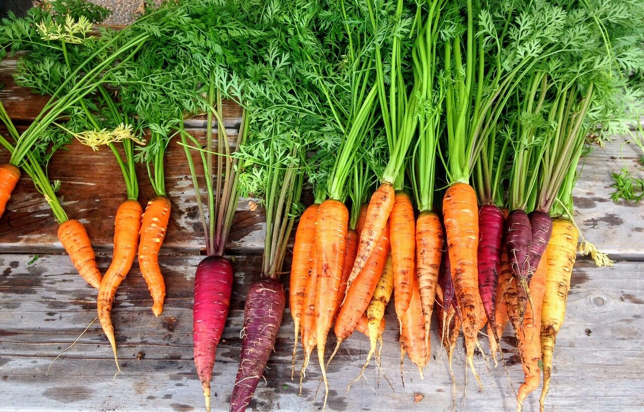 Carrots in a row on table