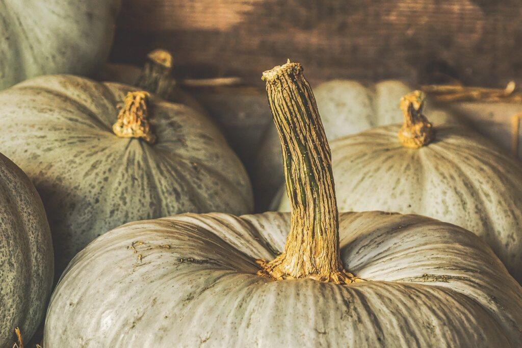 May 2021 Stored Pumpkins